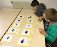 montessori international bordeaux insectes 19