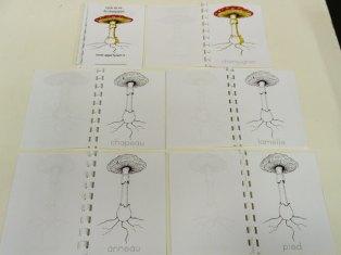 montessori international bordeaux champignons 6