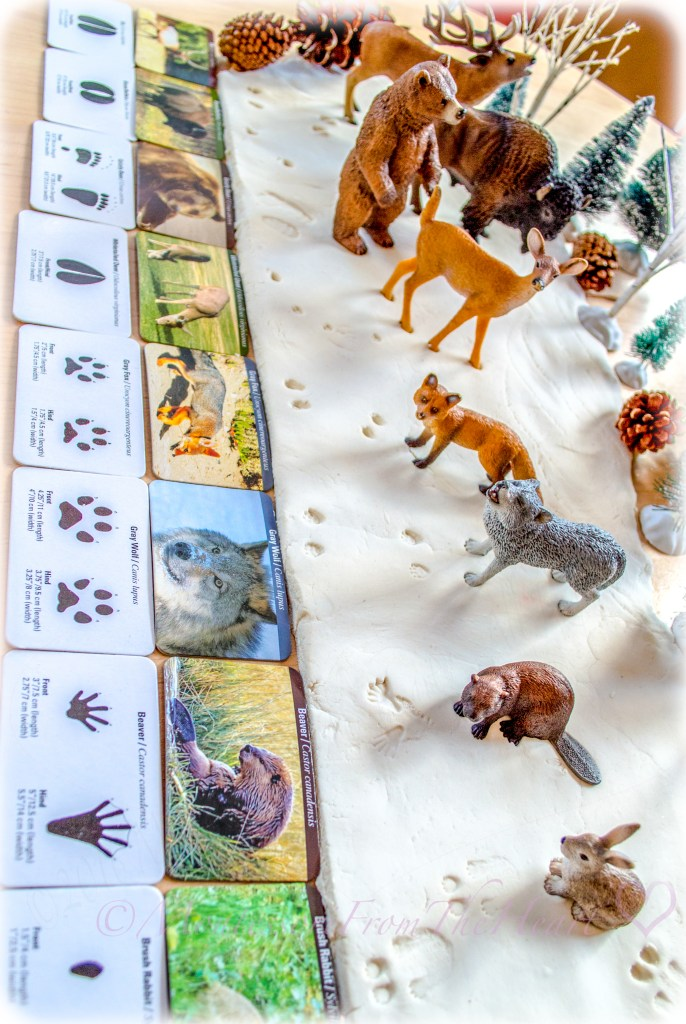 Identifying-Animals-Tracks-in-Snow-Play-Dough