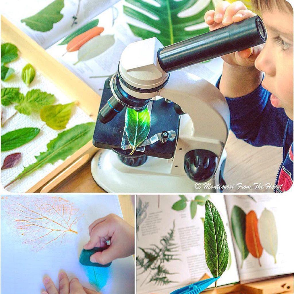 Botany Leaf Montessori  Study