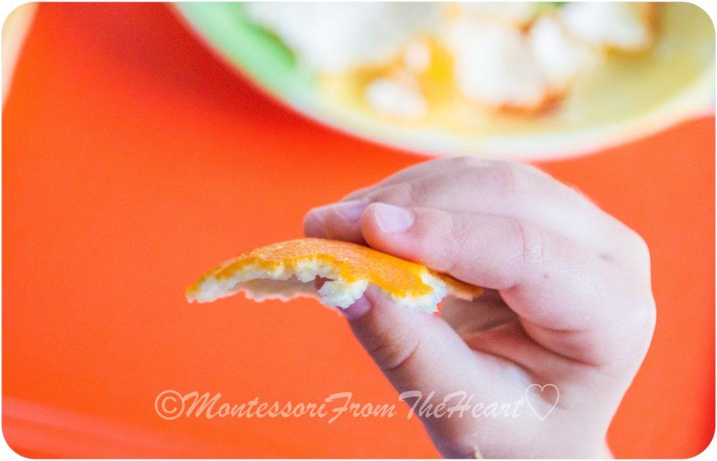 Tangerine-Skin-Montessori-Kids-Science