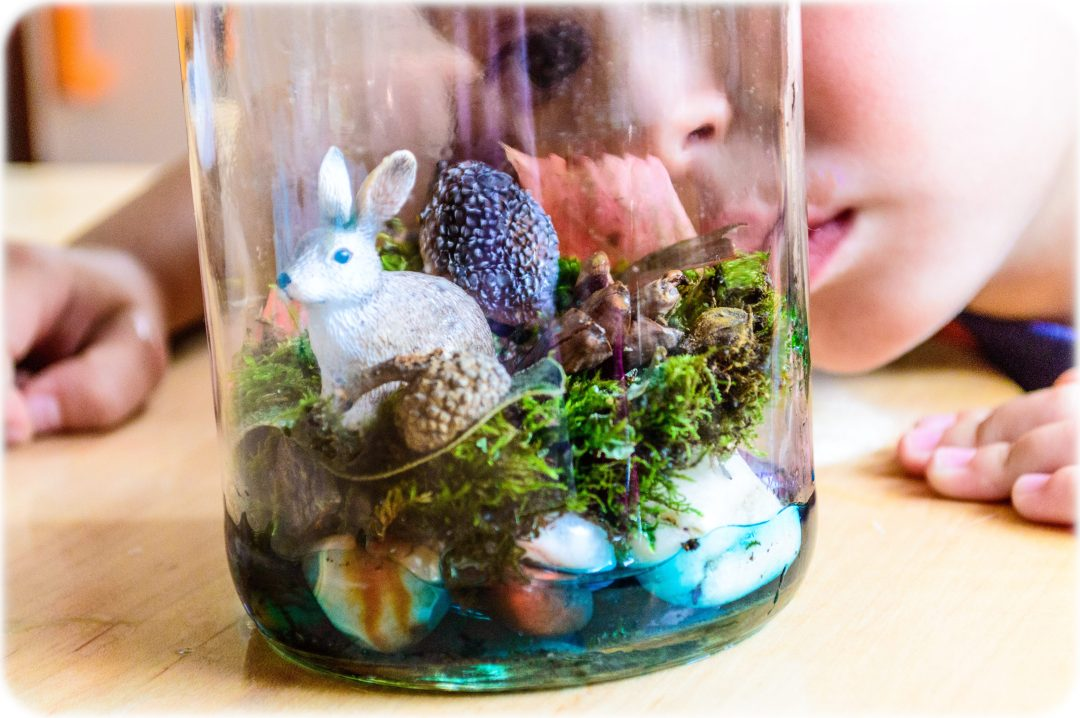 DIY-terrarium-STEM-science-in-a-bottle