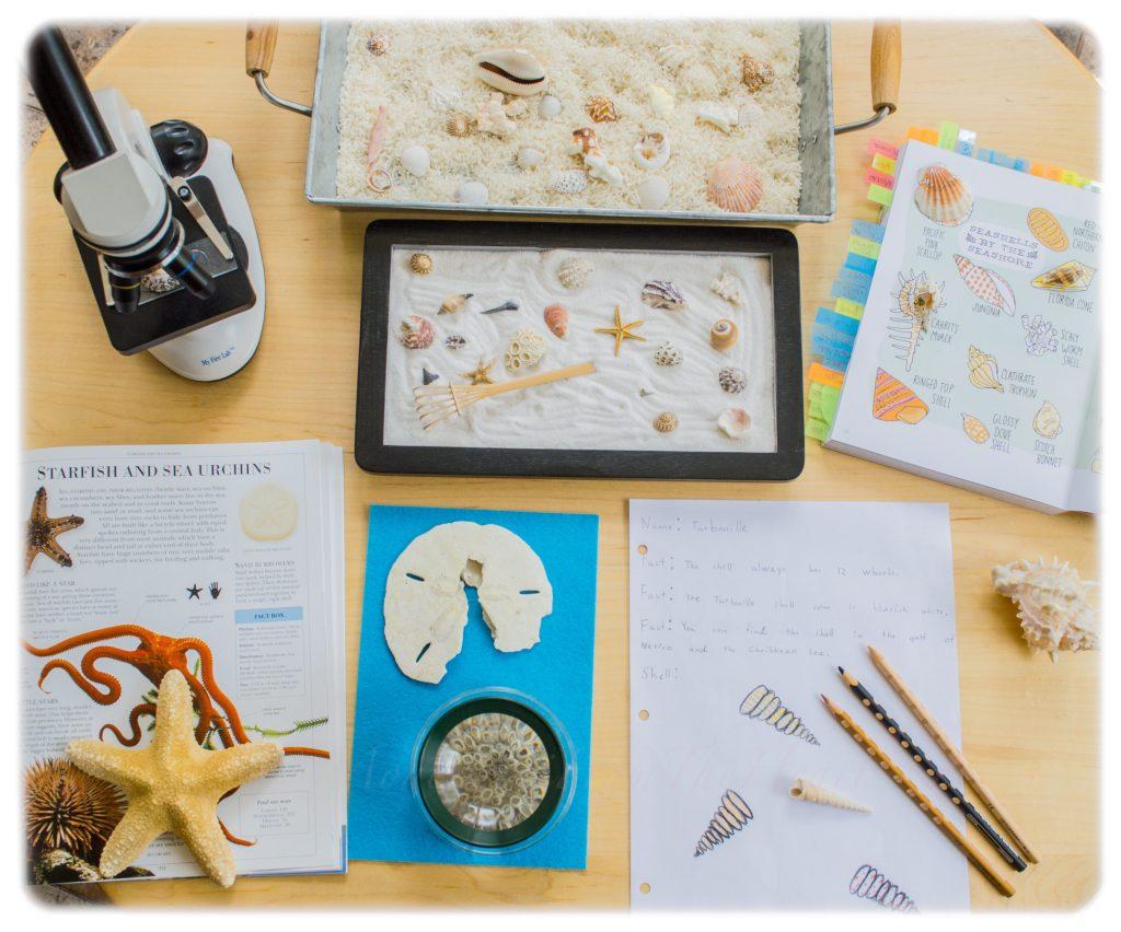 Seashells-Zen-Garden-Montessori-STEM