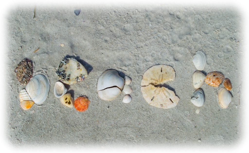 Spelling BEACH with Seashells