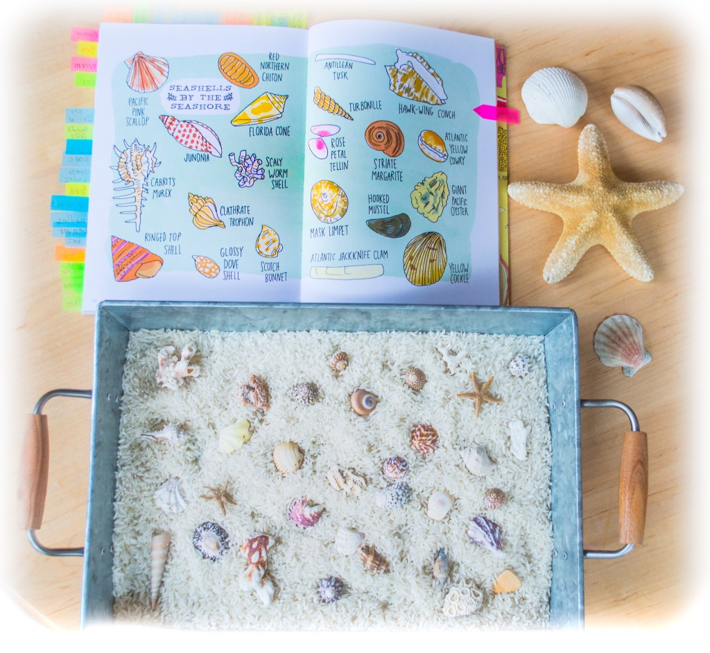 white-rice-seashells-sensory-bin-Montessori.