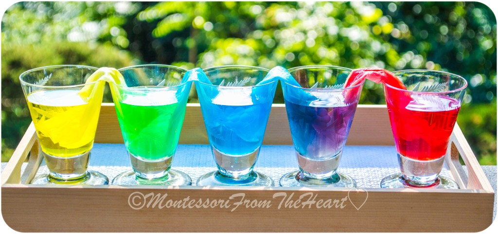 Capillary-Action-Timelapse-Kids-Science-Experiment-Rainbow-Walking-Water)