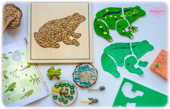 Frog-Puzzle-LifeCylce-Pin-Poke