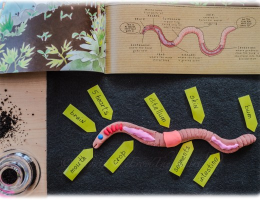 PARTS-OF-EARTHWORM
