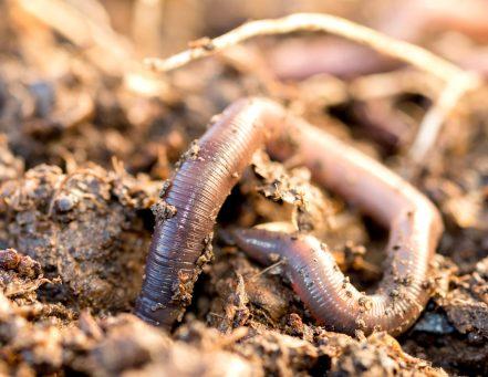Earthworm-Kids-Activities-Unit-Study