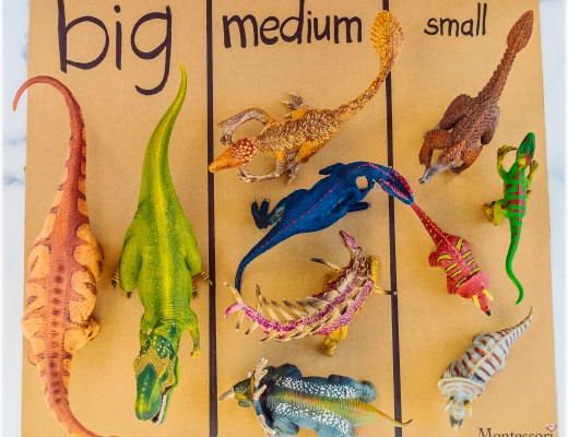 Dino-Schleich-BIG_MEDIUM_SMALL-SORT-Kids Activity