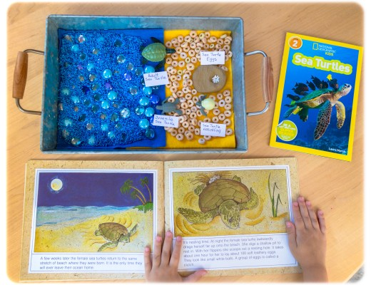 Lifecyle of a Turtle Sensory Bin