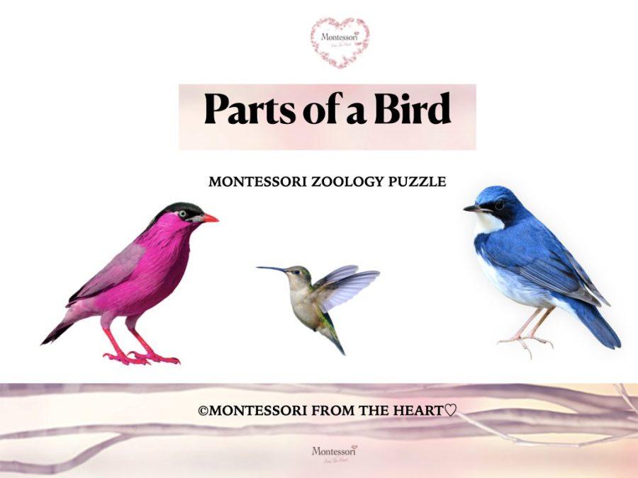 -BIRD PARTS OF Montessori Zoology Puzzle
