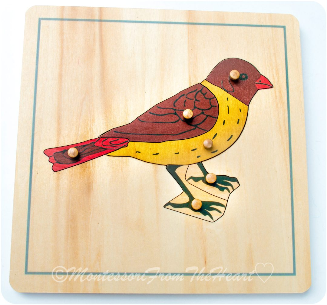 Parts of a Bird Montessori Zoology Puzzle