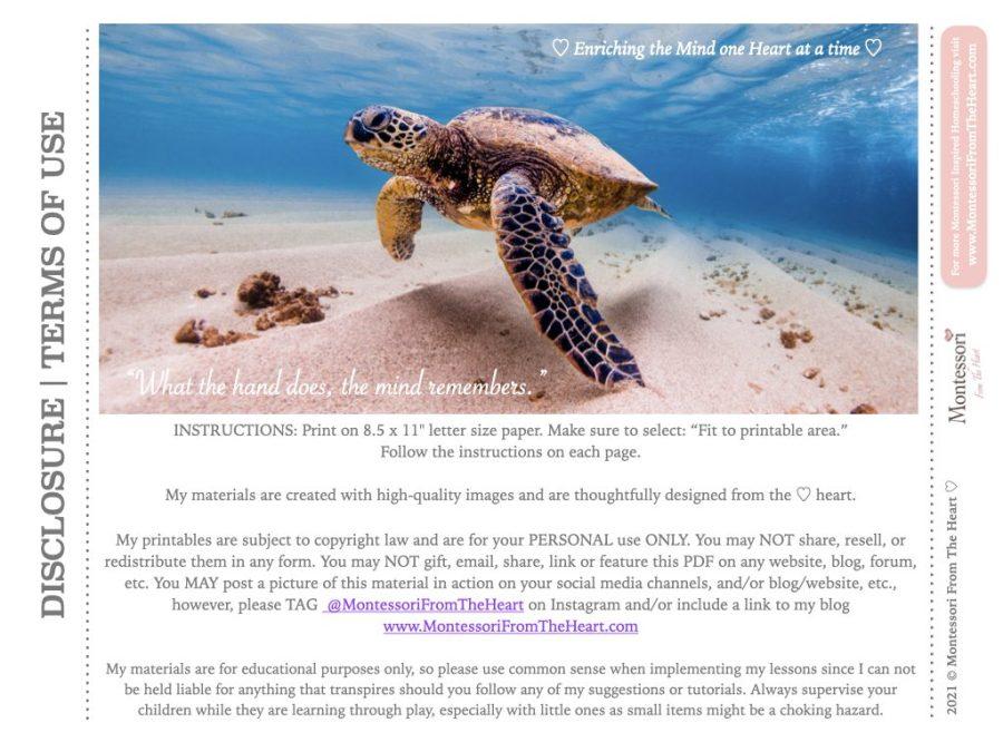 *Anatomy of Sea Turtle-Tortoise-Terrapin-Montessori-Biology Disclosure