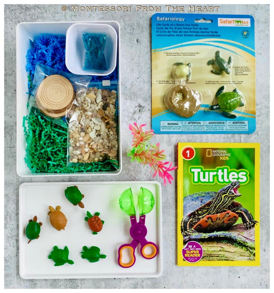 *Turtles Life-Cycle Learning Kit Unboxing