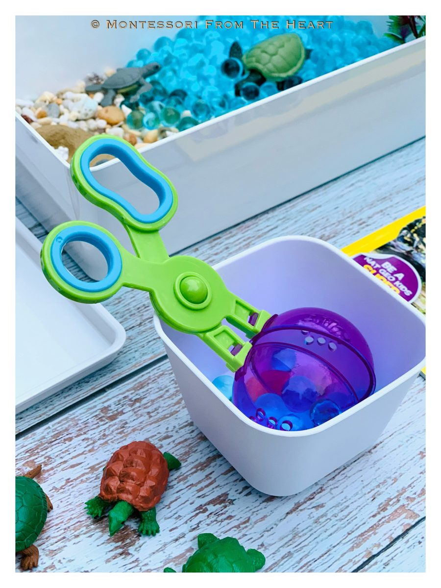 Turtles and Life-Cycle Learning Kit Scooper Fine Motor