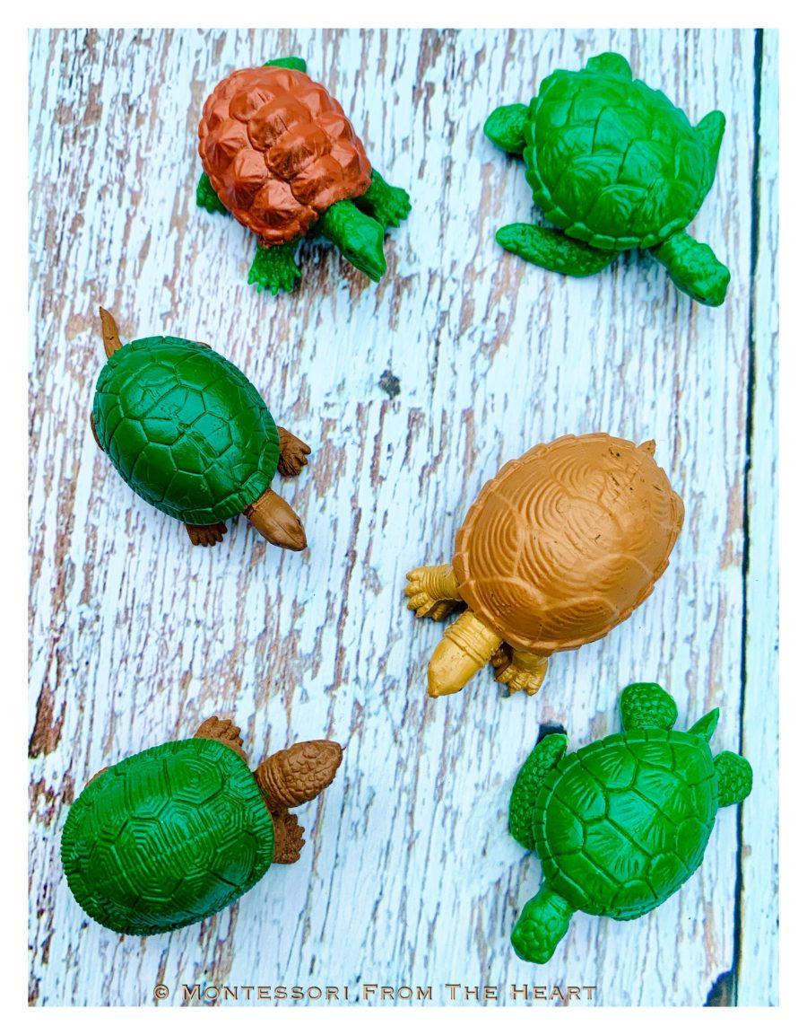 Types of Turtles