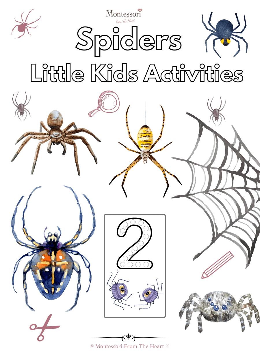 1 Spiders Little Kids Activities
