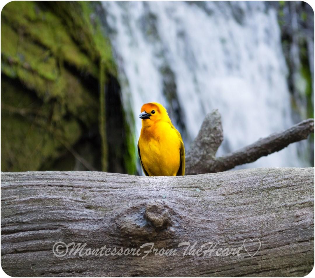 DSC_0021 Yellow