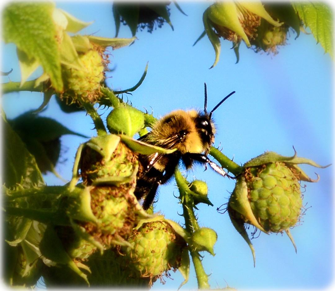 DSC_0074 bee copy 2