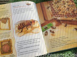 Friederun Reichenstetter a Hans-Günther Döring: Ako žijú zvieratká