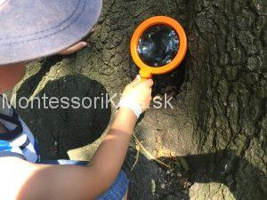 Montessori stromy