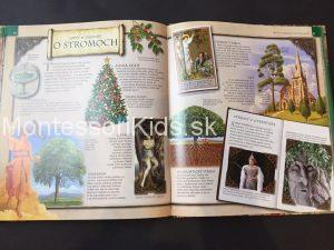 Stromy (Od semienka po hustý les)