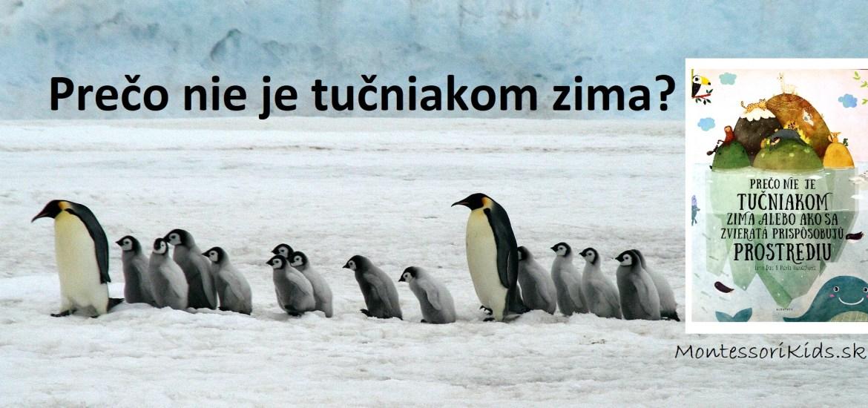 Prečo nie je tučniakom zima?