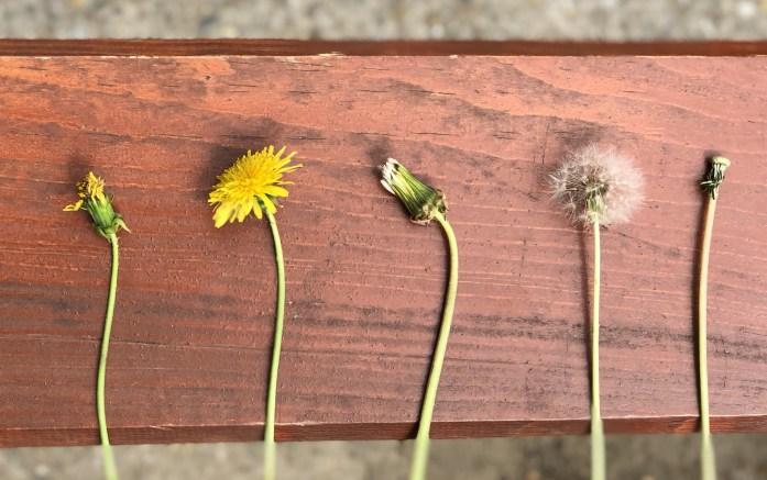 Nechajme deri trhať kvety