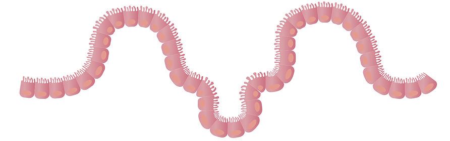 intestines-1468807_960_720.png