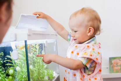 using an aquarium in the toddler classroom or montessori kita toddlers love to feed the fish in this quiet cozy reading zen corner of the environment which is very meditative, small, sunny, and beautiful. It also supports a love and respect for life nature while encouraging gentleness and calm around smaller living things.