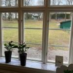 Utblick från ett fönster i skolan mot den gröna skolgården.