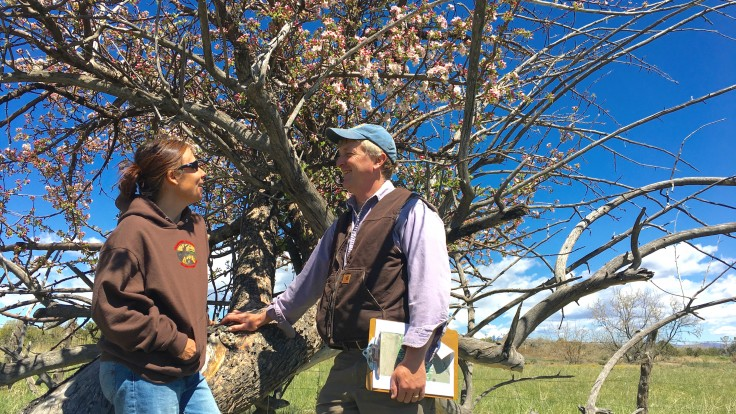 Addie and Jude Schuenemeyer discuss the possible variety of a 100-year-old apple tree. DNA tests will eventually confirm their guess.