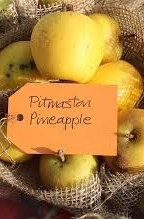 Pitmaston Pineapple