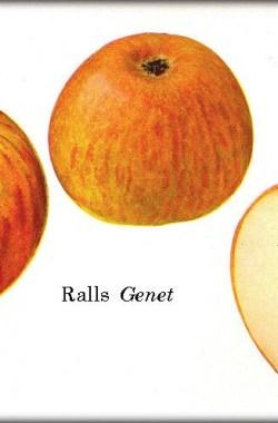 Ralls