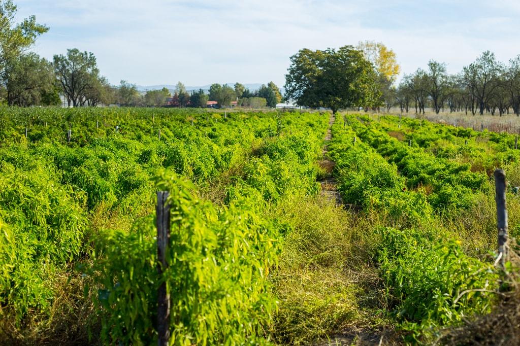 lagadasfarm field