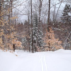 Ski de fond à Chertsey