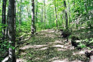 Chemins abandonnés