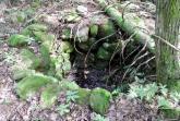 Puits dans la forêt