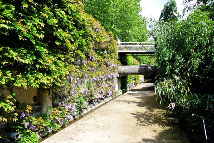 Glycine et bambous