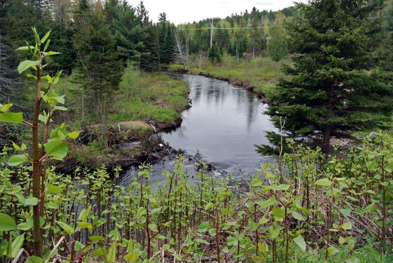 Parc Municipal: une bambouseraie au bord de la rivière