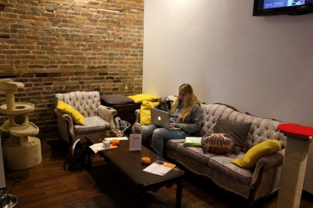 Cat Café. Photo Lisa Dorche.