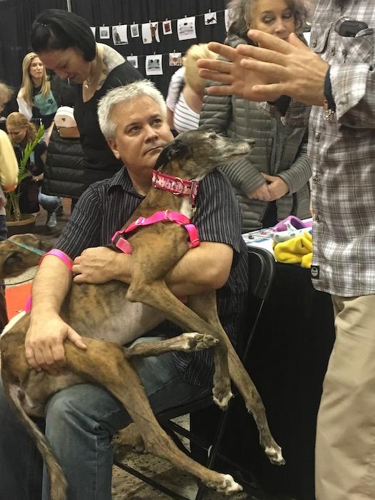 Greyhound as lap dog. Salon National de Animal Compagnie de Montreal. SNAC. Photo Rachel Levine