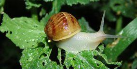 Organic Snails