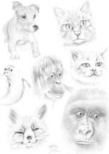Esbossos de diversos mamífers. | Esbozos de diversos mamíferos. | Some mammal sketches.
