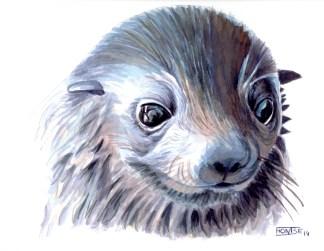 Bebè foca | Bebé foca | Baby seal