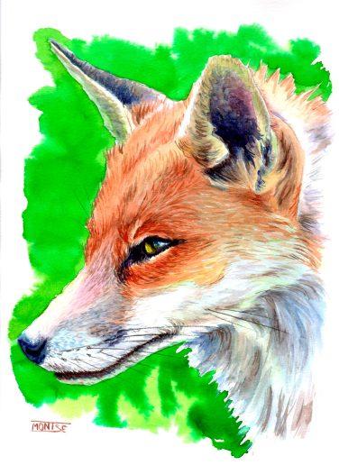Guineu roja | Zorro común | Red fox (Vulpes vulpes). Aquarel·la | Acuarela | Watercolour.