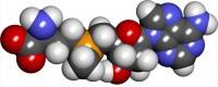 S Adenosyl Methionine