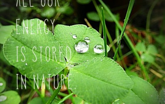 All our energy is stored in nature