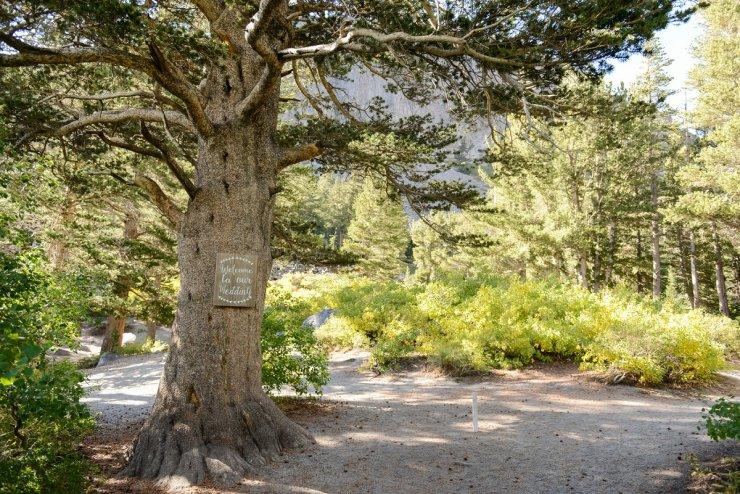 29-tamarack-lodge-forest-chapel-wedding-photographer